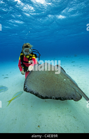 Scuba diver (woman) touch a Southern stingray (Dasyatis americana), Stingray city, Cayman islands, Caribbean sea - Stock Photo