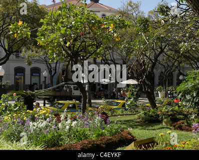 Jardim Municipal Gardens Funchal Madeira Portugal EU Europe   Stock Photo