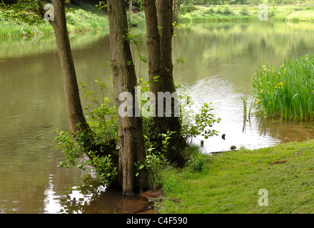 Soudley Ponds, Forest of Dean, Gloucestershire, England, UK - Stock Photo