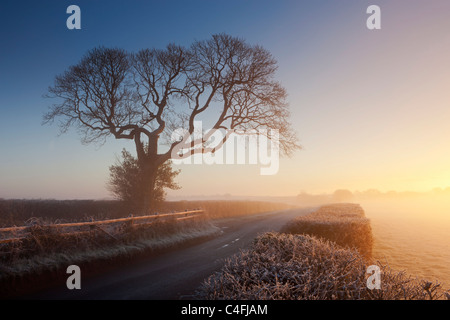 Tree and country lane on a misty morning at sunrise, Chawleigh, Devon, England. Winter (December) 2010. - Stock Photo
