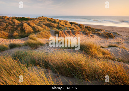 Marram grass on the sand dunes of Braunton Burrows, looking towards Saunton Sands, Devon, England. Summer (June) - Stock Photo