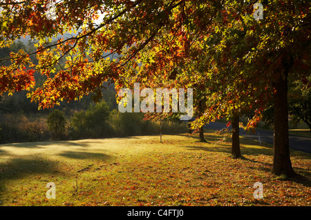Autumn Trees in Khancoban, Snowy Mountains, New South Wales, Australia - Stock Photo