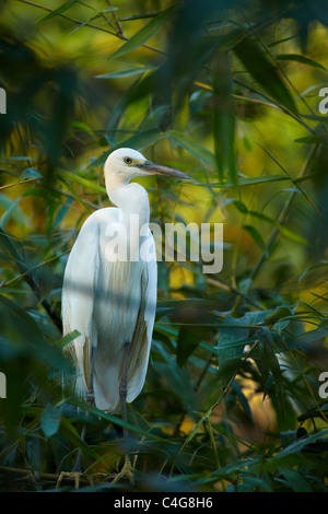 a crane in the trees nr Can Tho, Mekong Delta, Vietnam - Stock Photo