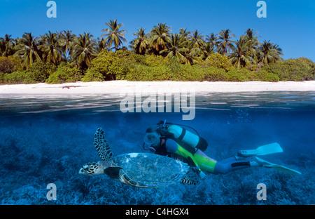 Over under water split image, scuba diver swimming with Loggerhead sea turle (Caretta caretta), Maldives islands, - Stock Photo