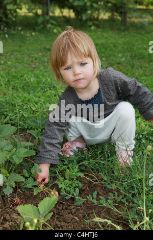 Toddler picking strawberries. - Stock Photo