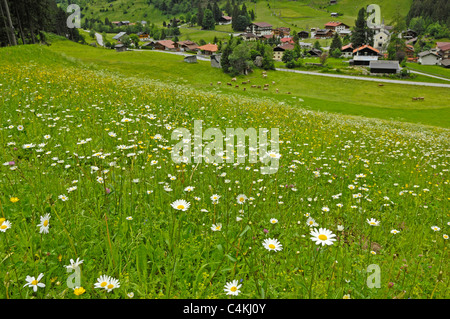 Traditional meadow flowers grown for animal feed on the side of a hill outside Ginzling in Austria. - Stock Photo