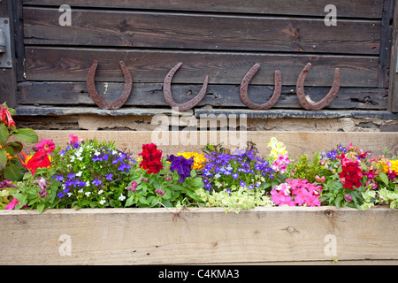 window box garden with horse shoes in the background - Stock Photo