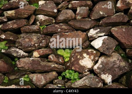 Stone Wall Ireland - Stock Photo