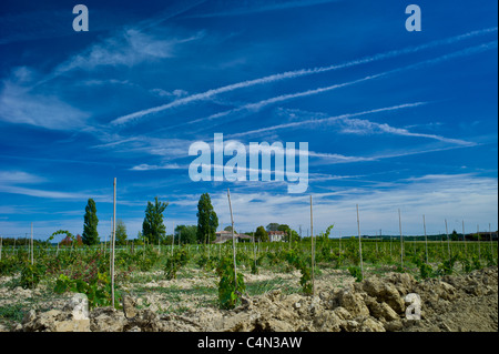 New vines planted in vineyard at Chateau Fontcaille Bellevue in Bordeaux wine region of France - Stock Photo