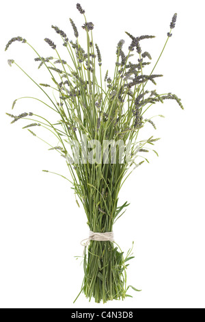 Fresh cut long stems of lavender tied with string - Stock Photo