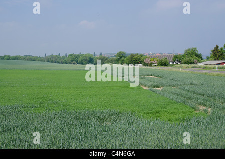 Denmark, Island of Bornholm. Countryside near Gudhjem. - Stock Photo