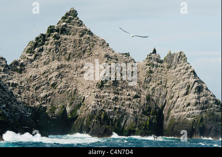 Little Skellig Island, Major colony for Northern Gannets (Sula bassana) County Kerry, Ireland - Stock Photo
