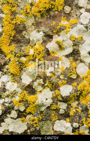 UK, Scotland, Orkney Islands, Ring of Brodgar, Neolithic Stone Circle, Lichens grow on sandstone monuments - Stock Photo