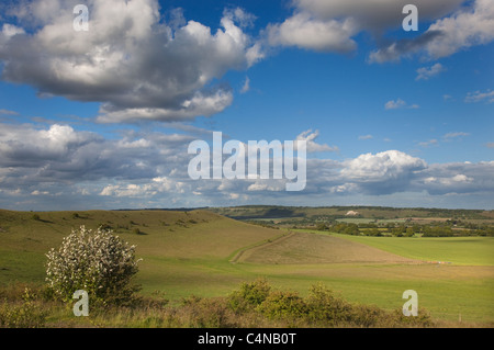The Chalk Lion at Whipsnade from Ivinghoe hills Chilterns Buckinghamshire - Stock Photo