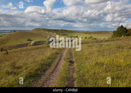 The Ridgeway Long distance path at Ivinghoe Beacon in the Chiltern Hills Buckinghamshire - Stock Photo