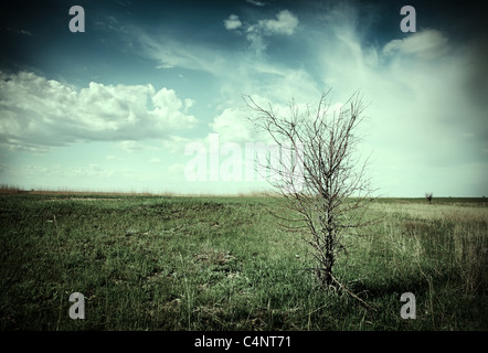 Drought. Lonely dead tree in a dry landscape. Desaturated picture. - Stock Photo