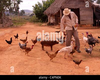 a Cuban farmer feeding his domestic animals - Stock Photo