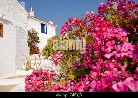 colourful flowers and typical white buildings on the way to the castle Castro in Skopelos Town,  Northern Sporades, - Stock Photo