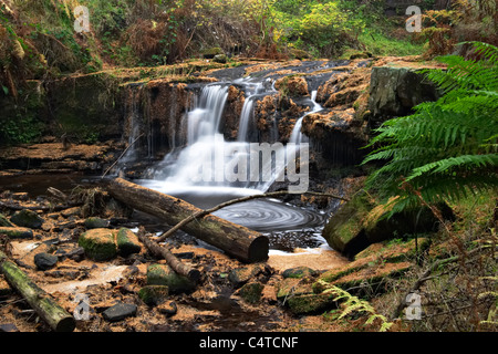 Blaen-y-glyn waterfalls, Talybont Forest, Brecon Beacons National Park, Wales - Stock Photo