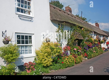 An old thatched cottage in the village of Branscombe between Sidmouth and Seaton, east Devon, south west England, - Stock Photo