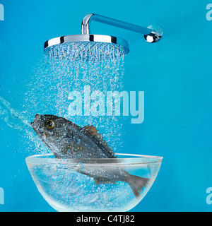Fish under shower - Stock Photo