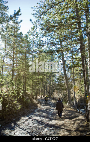 Hikers walking in woods - Stock Photo