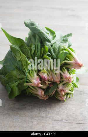 Fresh spinach - Stock Photo
