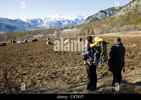 Family hiking together, looking at cows in mountain pasture - Stock Photo