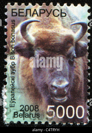 BELARUS - CIRCA 2008: A stamp printed in Belarus shows European bison - Bison bonasus, circa 2008 - Stock Photo