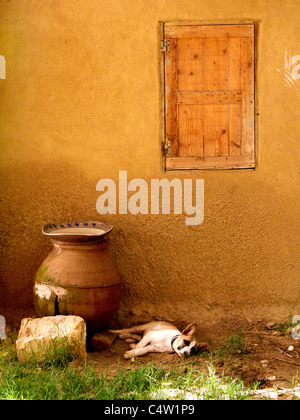 shot taken in Egypt at Fayoum  west of Cairo the shot wasn't planned - Stock Photo