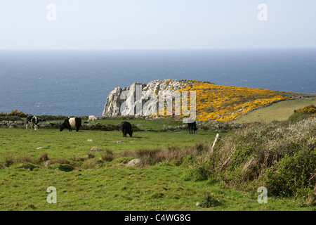 The Cliffs and Headland at Rosemergy (Between Porthmeor and Morvah), West Penwith, Cornwall, UK. - Stock Photo