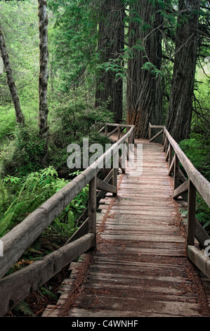 This footbridge leads to a grove of giant redwood trees in California's Prairie Creek Redwoods State and National - Stock Photo