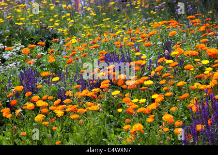 Wild flowers growing in Royal Botanic Gardens, Kew, London - Stock Photo