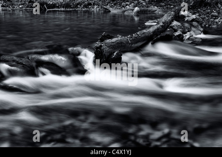 Beautiful light in relaxing tranquil slow motion silky river water flowing over rocks and fallen tree covered in - Stock Photo
