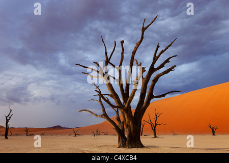Storm clouds and dead tree. Dead Vlei.Namibia - Stock Photo