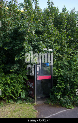 BT Telephone Box half hidden by overgrown bushes - Stock Photo