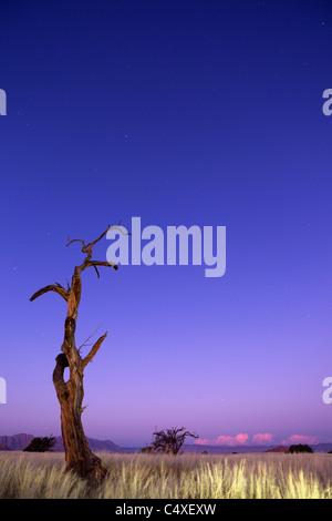 Scenery showing the unique ecology of the south-west Namib desert or pro -Namib. NamibRand Nature Reserve, Namibia - Stock Photo