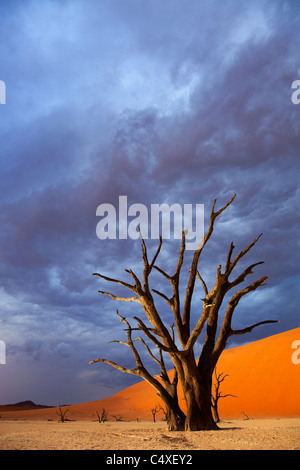 Salt pan. Dead Vlei.Namibia - Stock Photo