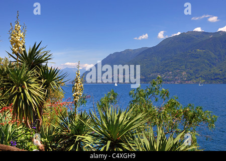 View of the Lago Maggiore from the Botanical Garden of the Isole di Brissago - Stock Photo