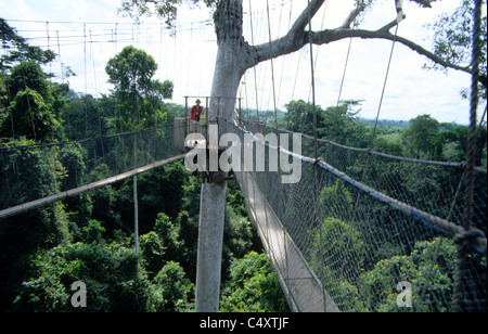 Tree top walkway in Kakum national park, near cape coast west ghana - Stock Photo