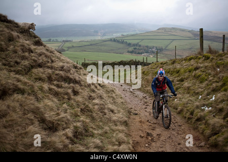Mountain biker rides a trail past a cow in the Peak District, England, United Kingdom - Stock Photo