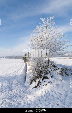 Animals tracks in fresh snowy landscape - Stock Photo