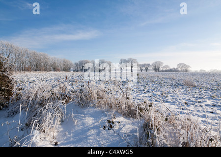 A covering of fresh snow over a rural landscape - Stock Photo
