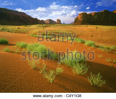 0195-1052LVT  Copyright: George H. H. Huey  Monument Valley. Sand dunes and mesas. Monument Valley Tribal Park, - Stock Photo