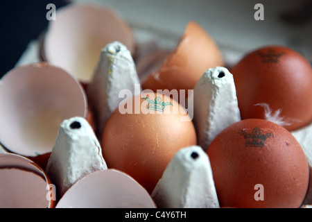 Free range eggs and egg shells from Burford Brown hens in an egg box - Stock Photo