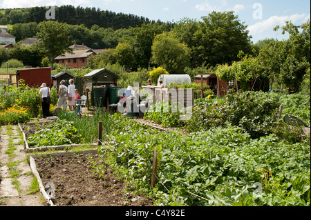 Allotment gardens open to the public on National Garden Society open day, Aberystwyth Wales UK - Stock Photo