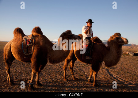 Two Humped Bactrian Camels