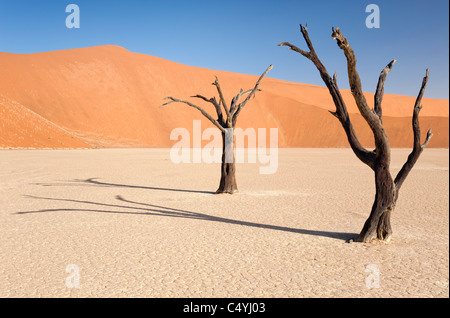 Dead camelthorn trees, Sossusvlei, Namib Desert, Namibia - Stock Photo