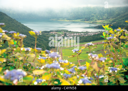 View of Sete Cidades crater with hydrangeas on the foreground in an overcast day. Sao Miguel island, Azores, Portugal. - Stock Photo