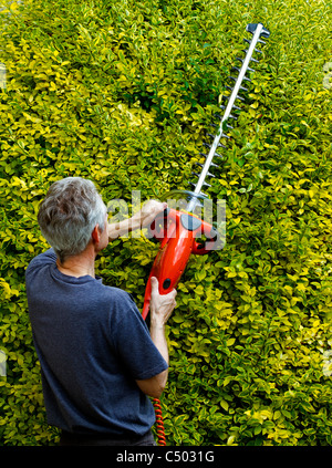 Older man using hedge trimmer UK - Stock Photo